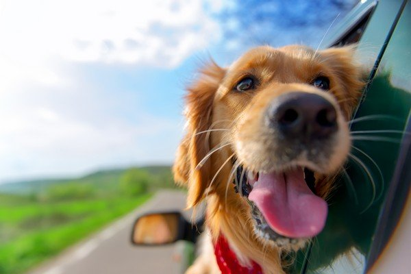 how to travel with pet in car