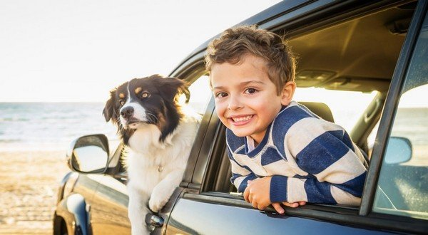 a dog and a boy leaning out of car window