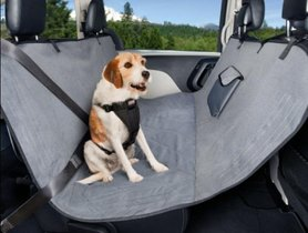 Car accessories and features for pets