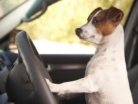 What Should You Know About Dogs' Motion Sickness?