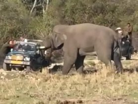 What Happens When A Tourist-Filled Maruti Gypsy Gets Attacked By An Elephant?