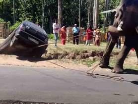 Watch an Elephant Rescuing a Maruti 800 Stuck in a Ditch
