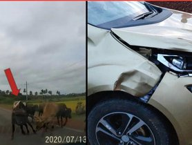 Latest Accident of Tata Altroz Highlights Importance of Driving Carefully Around Cattle [VIDEO]