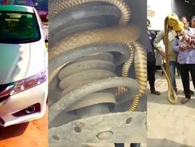 Poisonous Snake Successfully Rescued From Honda City